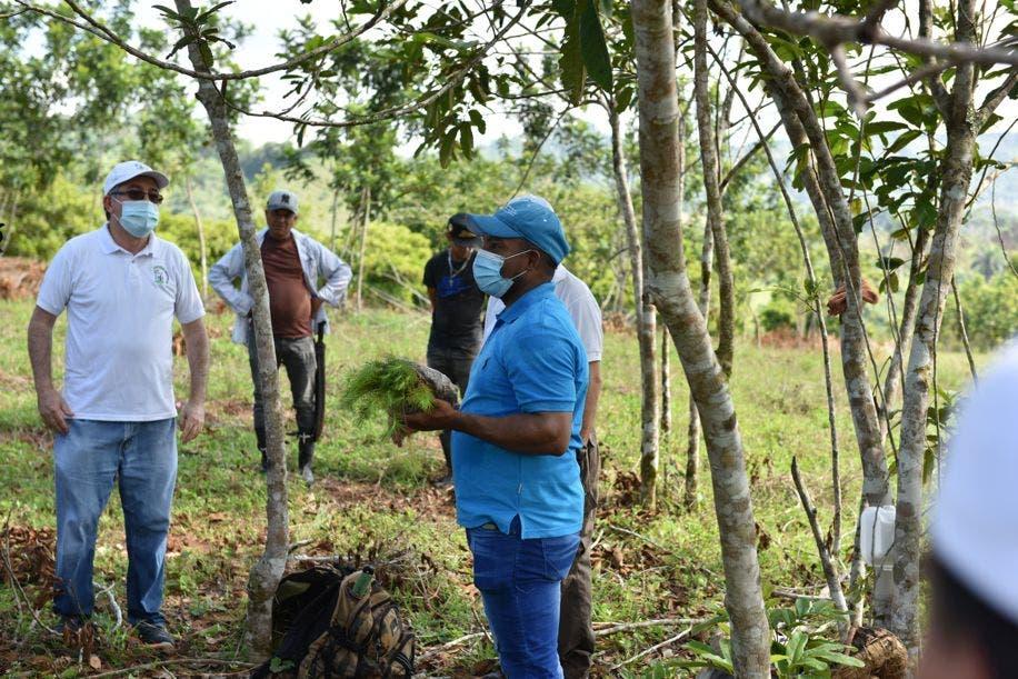 Voluntarios del Banco Central realizan jornada de reforestación en río Ozama