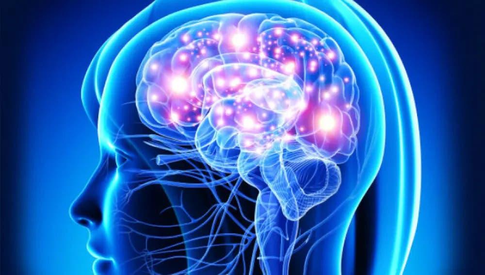 Estudio revela como el 'navegador' del cerebro calcula la ruta más corta