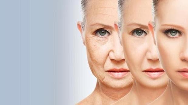 Crean anticuerpos para destruir células viejas y frenar el envejecimiento