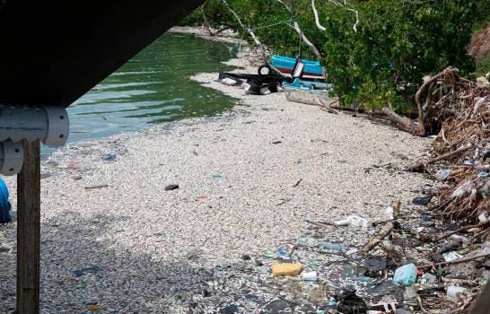 Medio Ambiente investiga muerte de peces en puerto El Cayo de Barahona