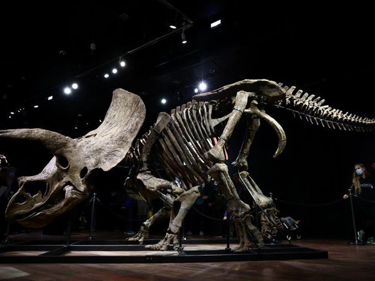 Subastan por 6,65 millones de euros el esqueleto de un triceratops
